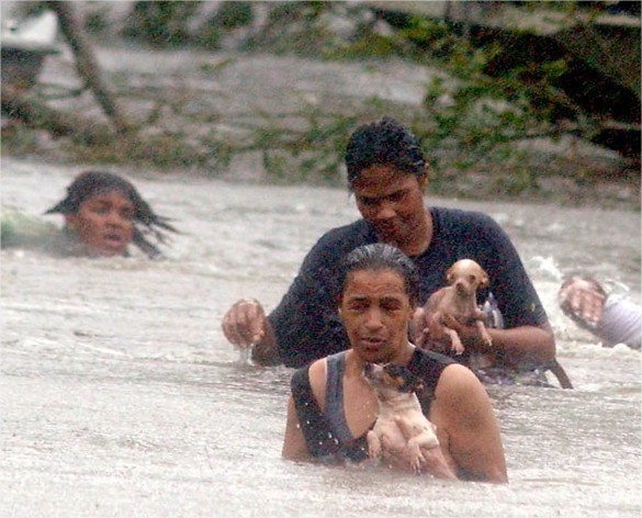 Hurricane Katrina dogs